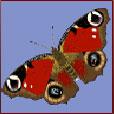 Символ бабочки