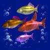 Косяк риби